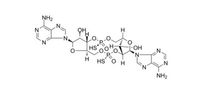 环状二核苷酸类STING激动剂